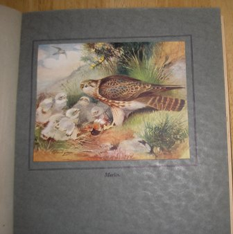 Image for Birds And Their Young