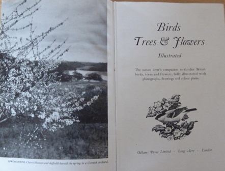 Image for Birds Trees & Flowers Illustrated